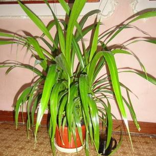 комнатные растения большие фото и название