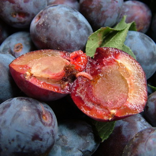 Дерево абрикоса из косточки в домашних условиях 145