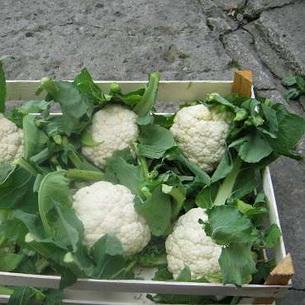 Как хранить цветную капусту на зиму правильно в домашних