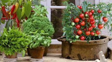 Полив растений: как правильно поливать цветы Журнал