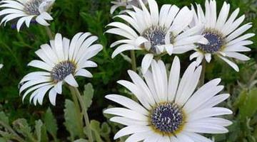 Выращивание липы из семян  indasadru