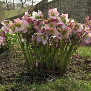 Комнатные цветы фото с мелкими розовыми цветочками