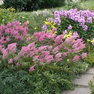 цветы эмилия звездочка фото