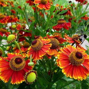 цветы в саду многолетние фото и названия
