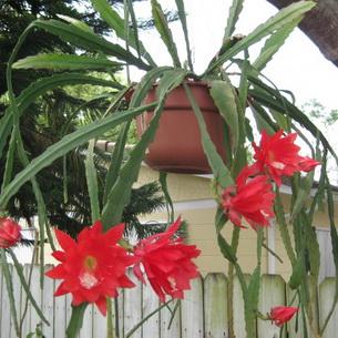 кактусы фото и название