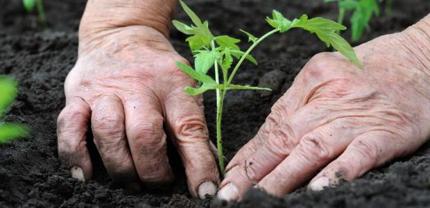 Выращивание овощей на даче: основные условия и особенности