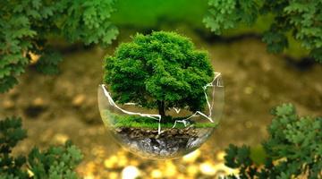 Углекислый газ для питания и роста растений