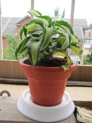 Почему плохо растут комнатные растения в доме
